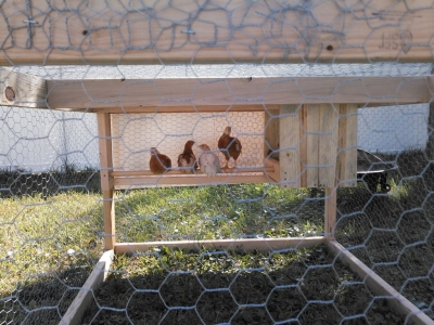 We Have Chickens at the new Yardstead