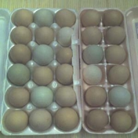 Yard Eggs - Fresh Chicken Eggs